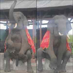 Btw, udah pernah lihat anunya gajah? :))
